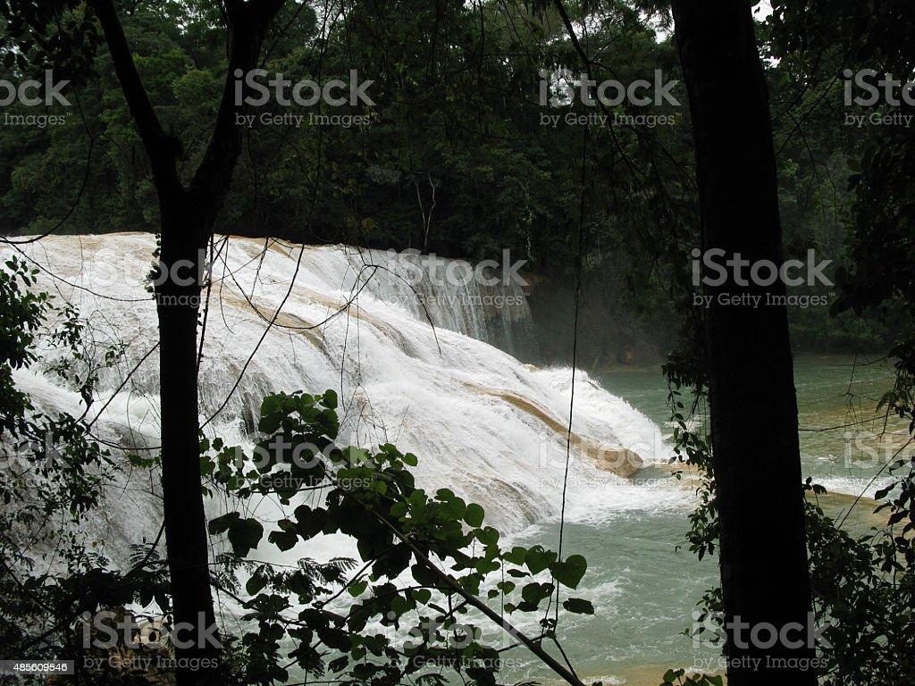 Vegetación y agua stock photo