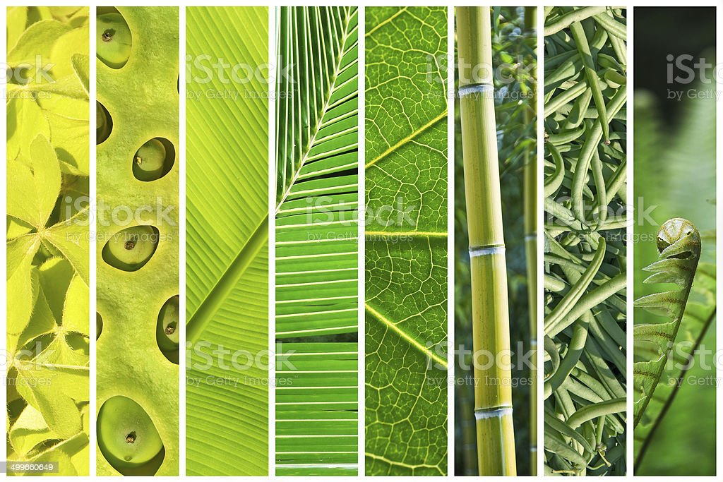 Vegetal green gradation collage stock photo