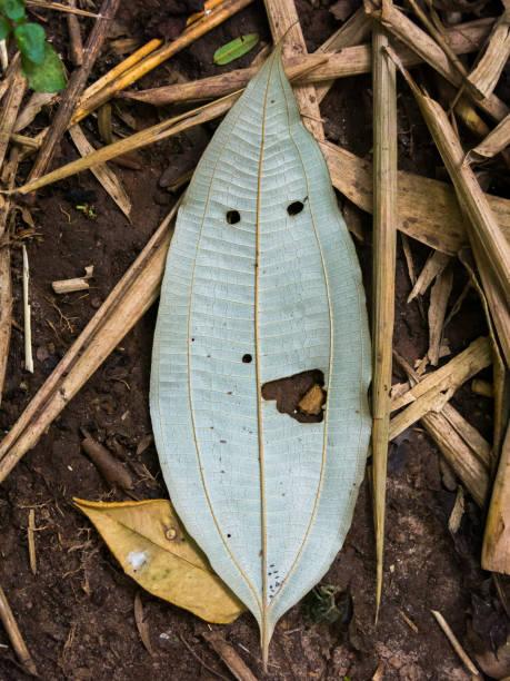 Vegetal leaf looking like a happy face - pareidolia stock photo