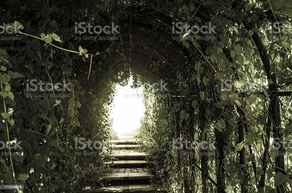 vegetation archway tunnel with light at the end stock photo