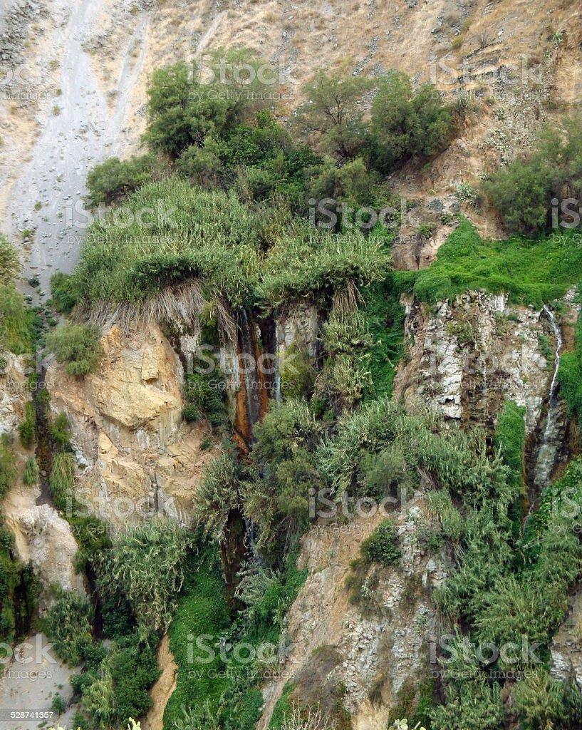 vegetation at Colca Canyon stock photo