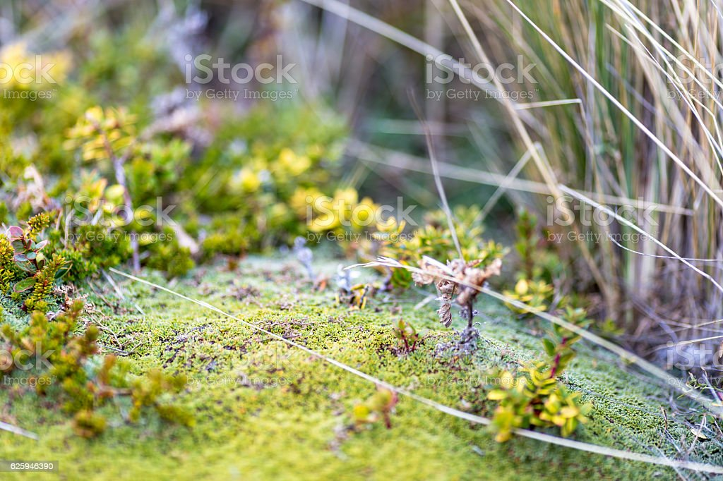 Vegetation close up at Bridges Island in Beagle Channel stock photo