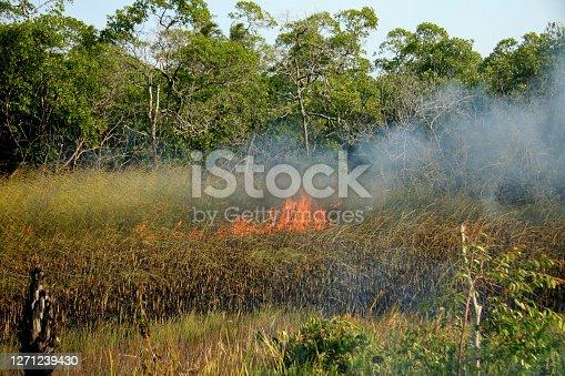 santa cruz cabralia - november 10, 2008: Fire destroys vegetation in environmental protection area is seen in Santo Andre district.
