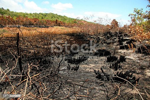 porto seguro, bahia / brazil - february 16, 2009: area devastated by fire in native forest in the city of Porto Seguro, in the south of Bahia.