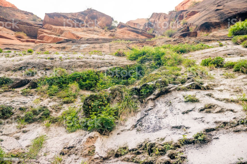 Vegetation Growing on Mountainside Zion National Park Utah USA - Royalty-free Beauty In Nature Stock Photo