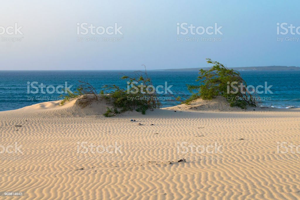 Vegetation growing on the edge of a sand dune with the Atlantic Ocean in the background - foto stock