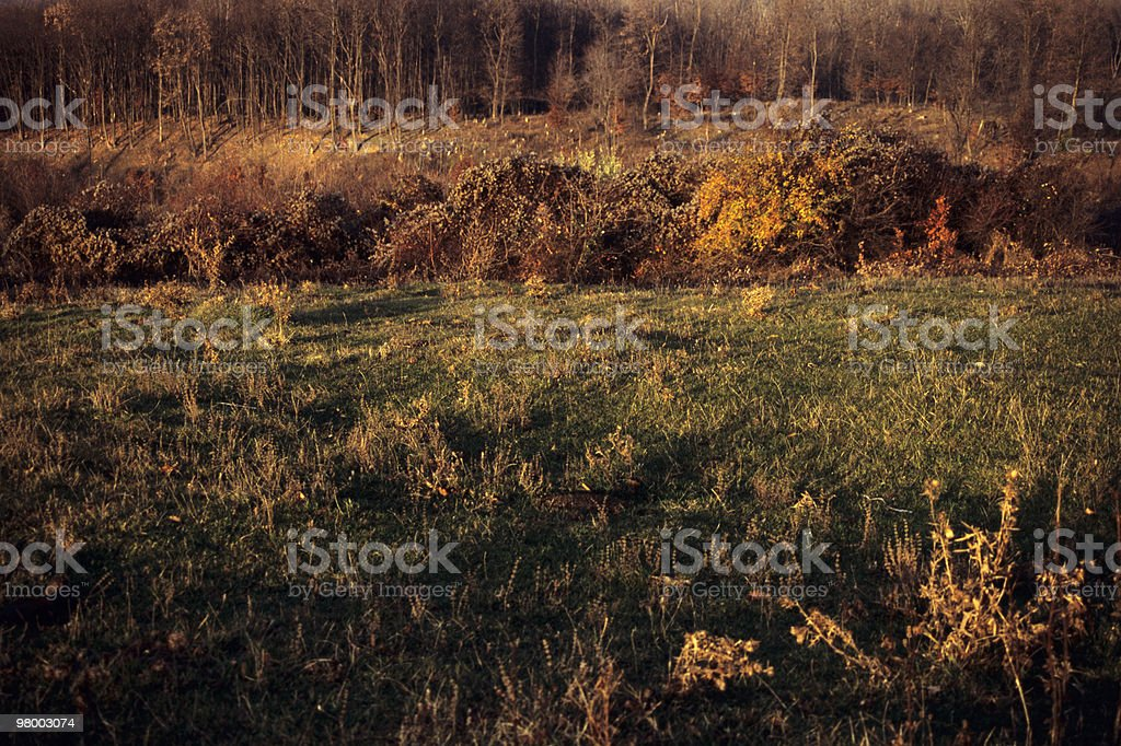 vegetation in fall season royalty free stockfoto