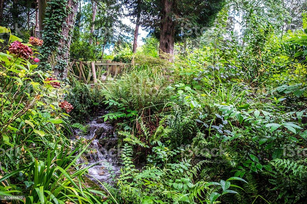 Vegetation In Jardin Des Plantes Garden Public Park In ...