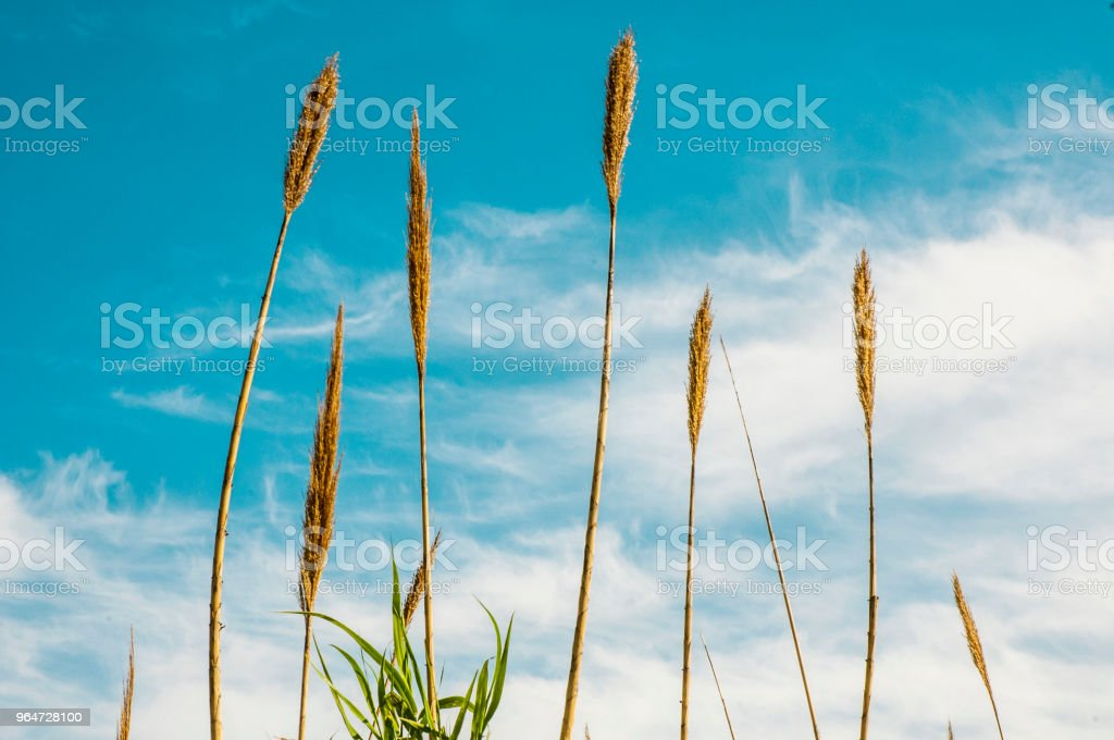 Vegetation in the forest royalty-free stock photo
