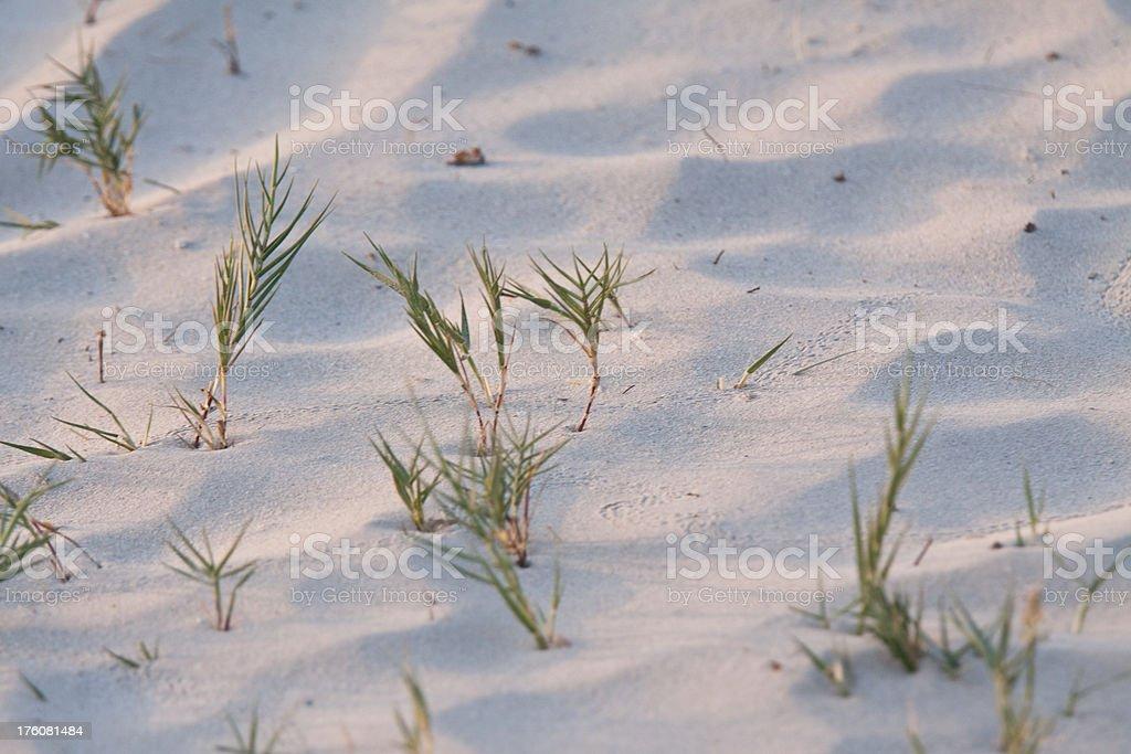 Vegetation in the sand stock photo