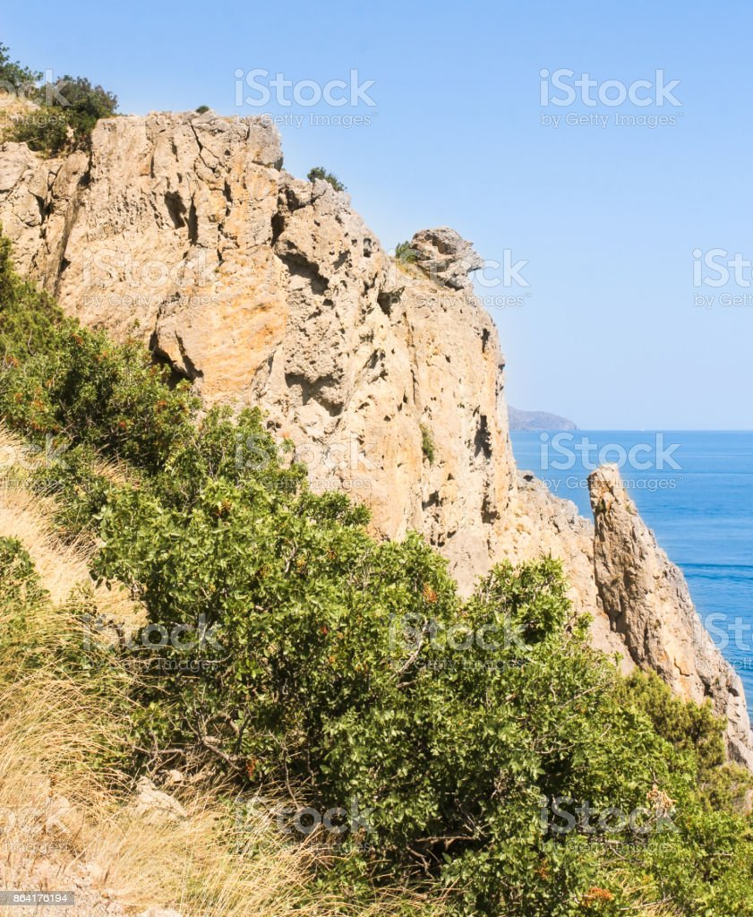 Vegetation near the rocks. royalty-free stock photo