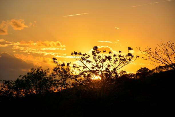 vegetação do nordeste brasileiro semi-árido iluminado com as cores quentes por do sol. - nordeste - fotografias e filmes do acervo
