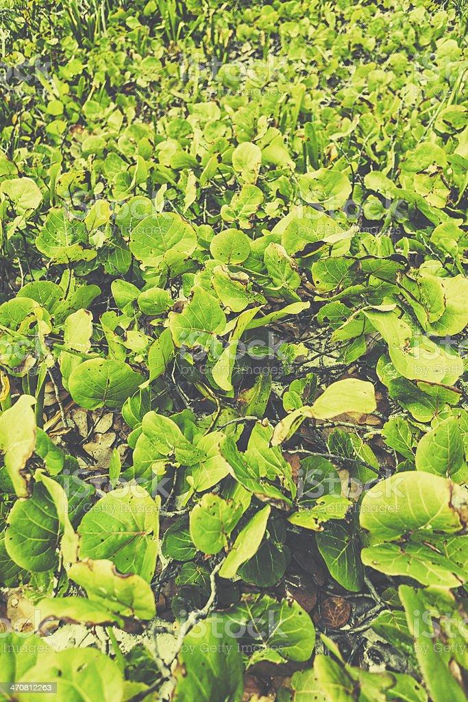 Vegetation of the coast stock photo