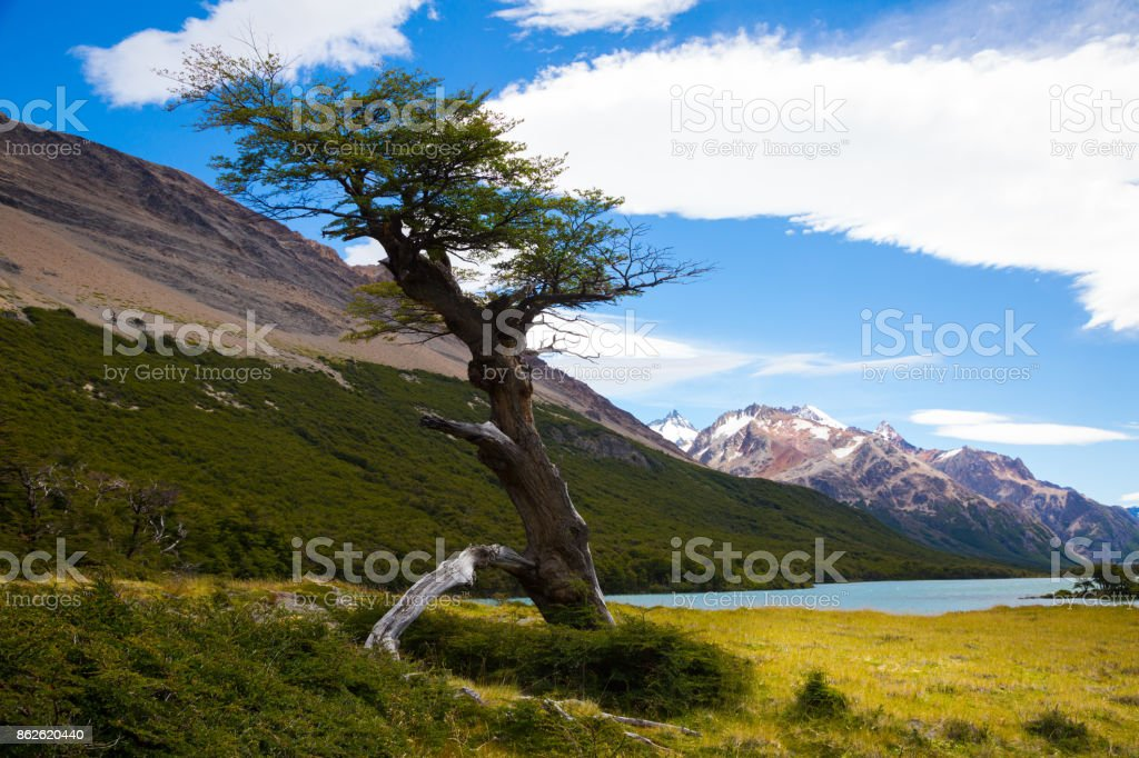 Vegetation on Andes foothills and slopes stock photo