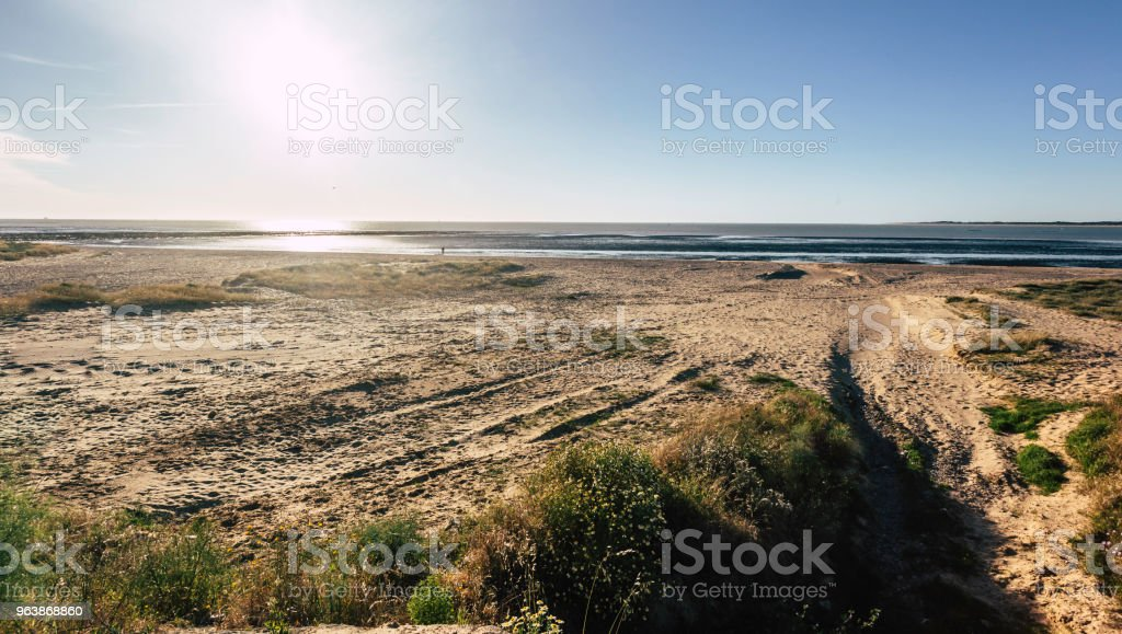 Vegetation on the beach of Sanlucar de Barrameda at low tide and person on the shore - Royalty-free Andalusia Stock Photo