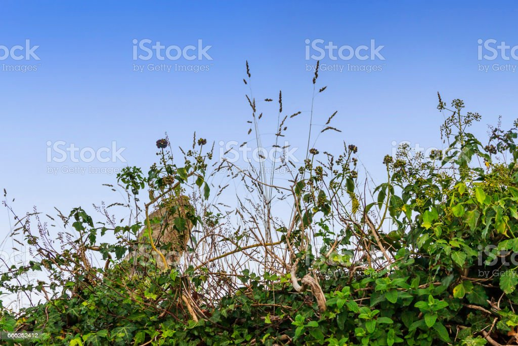 Vegetation on the wall stock photo