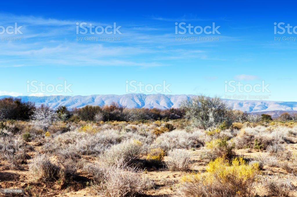 Vegetation with blooming fynbos in the Sanbona Wildlife Reserve, South Africa stock photo