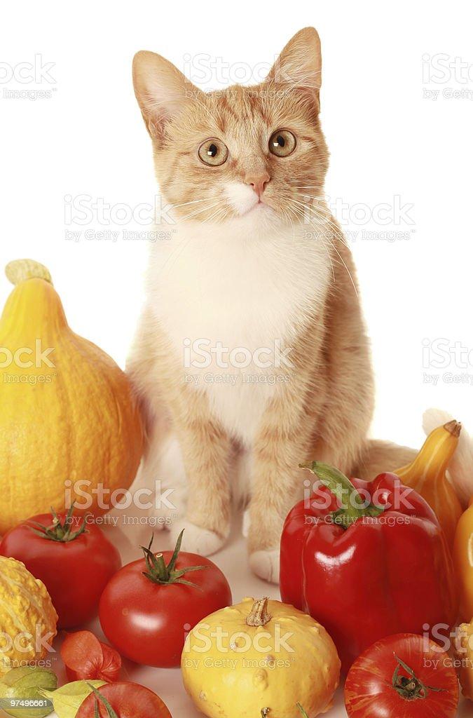 vegeterian cat royalty-free stock photo