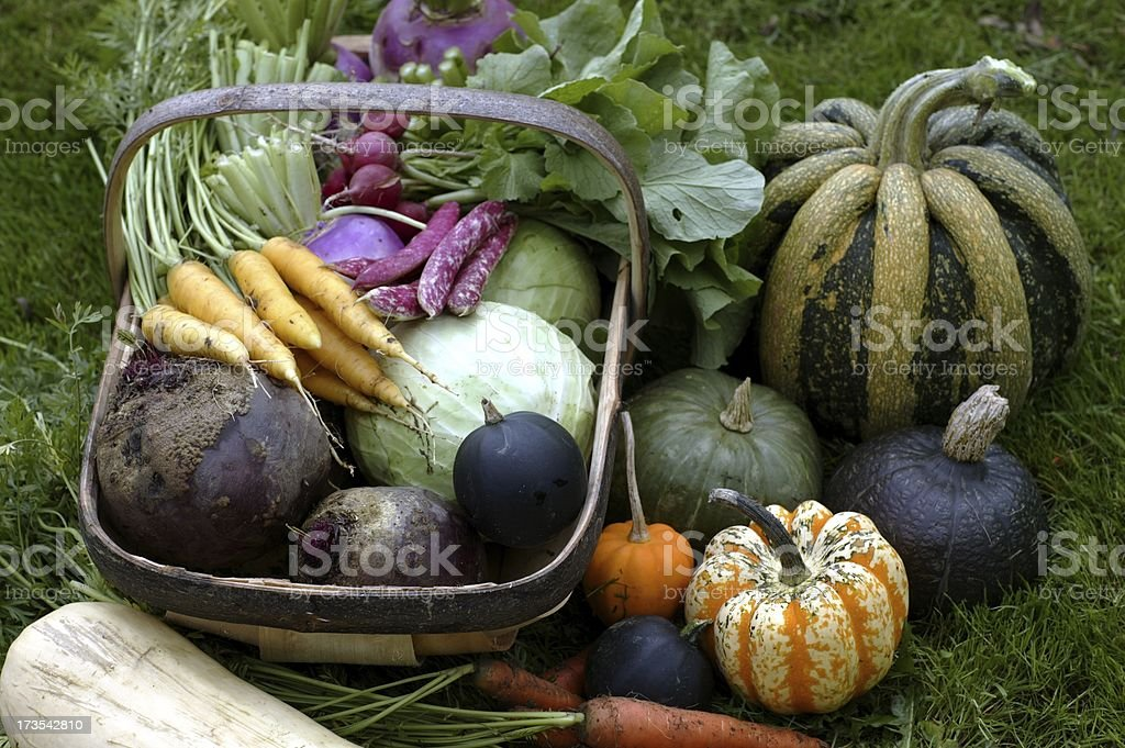 Veggie plot bounty stock photo