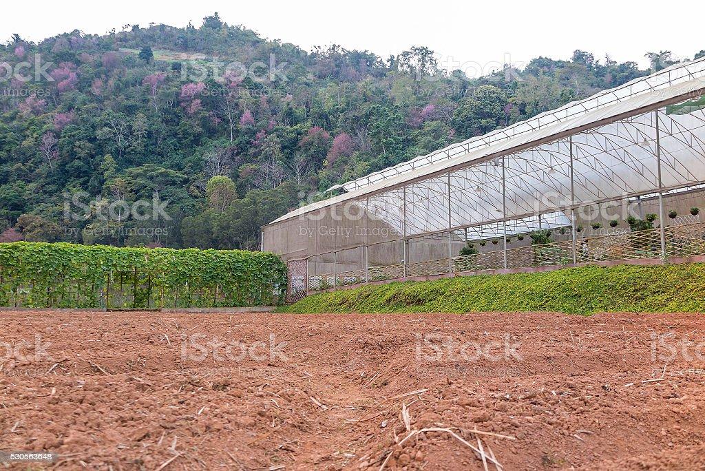 veggies house and prepared land garden in the mountain stock photo