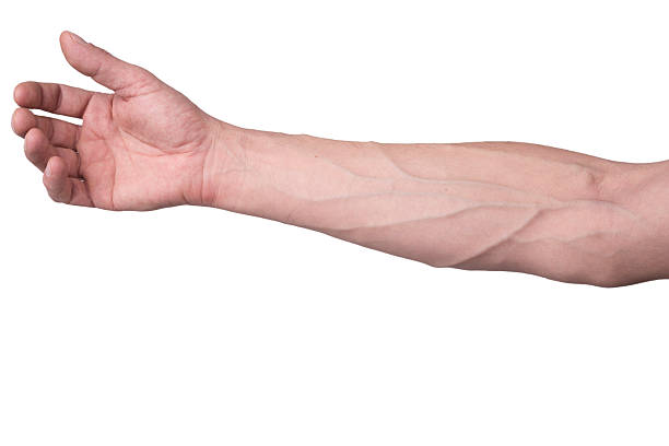 Veins on an arm stock photo