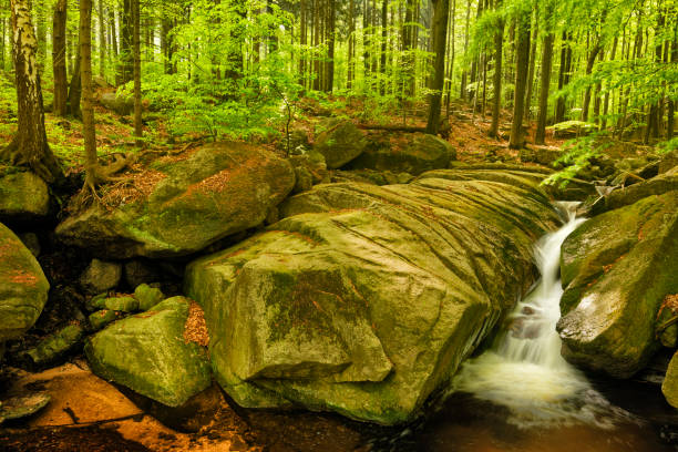 Velky Falls in super green forest surroundings, Czech Republic stock photo