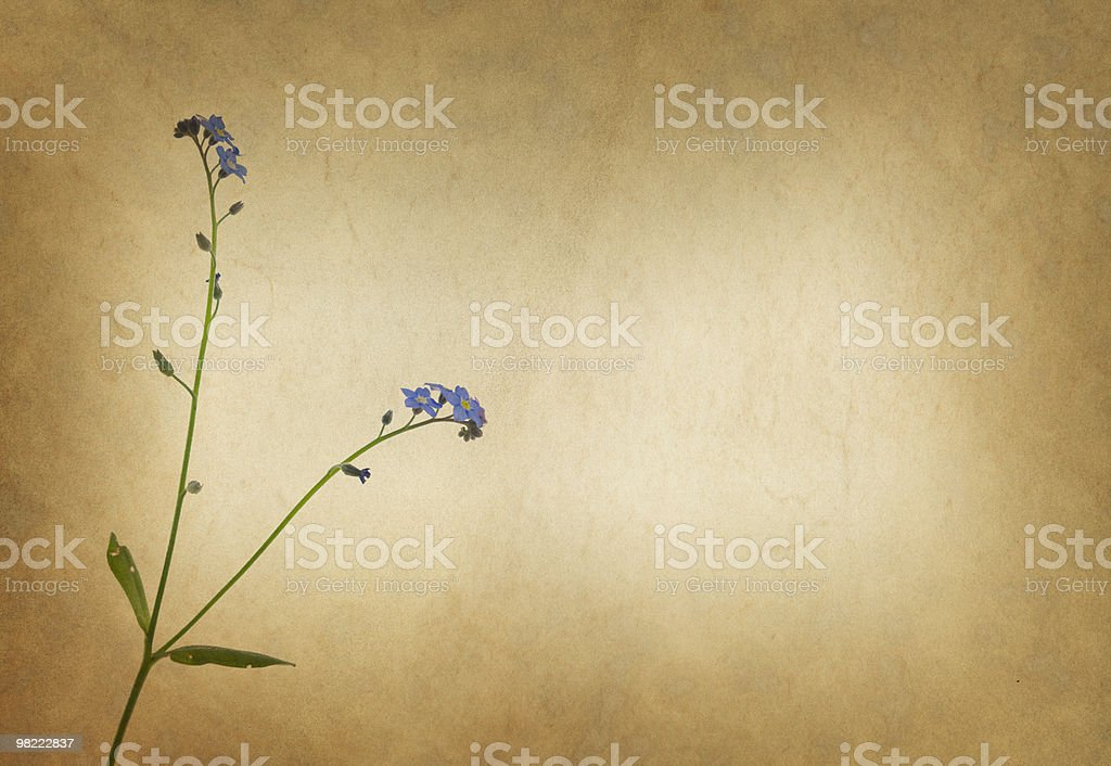 Vellum Background with Floral Pattern royalty-free stock photo