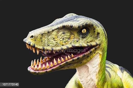 Velociraptor dinosaur, on a black background.