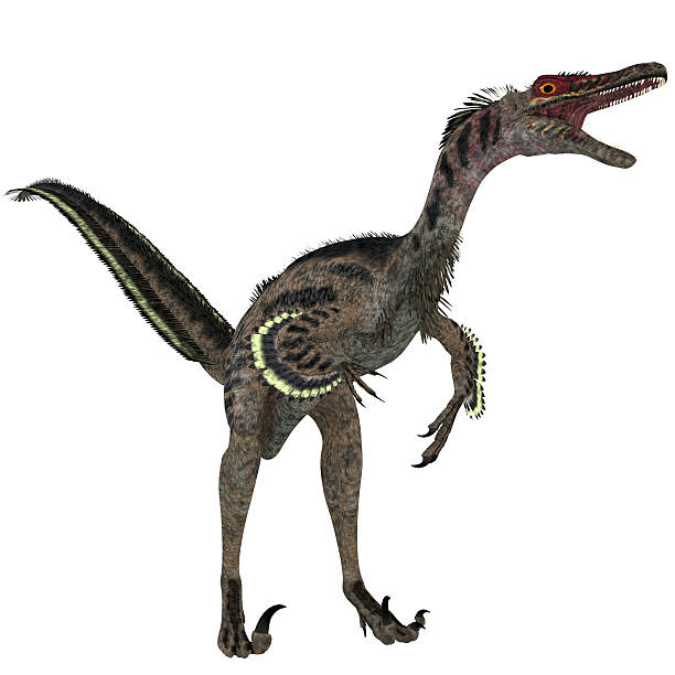 Velociraptor on White stock photo