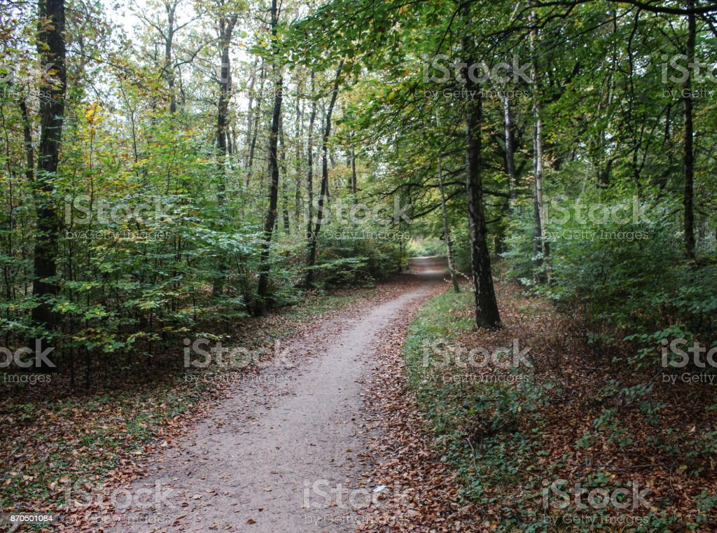Veluwe forest in autumn stock photo