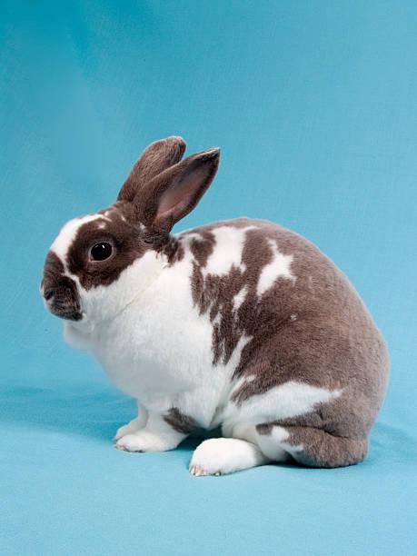 velveteen rabbit - plüschhase stock-fotos und bilder