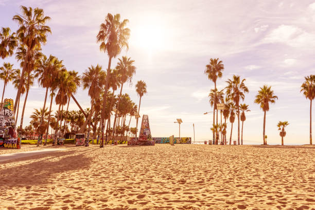 Venice beach in the morning with palm trees and endless sand shore. Los Angeles, California. stock photo