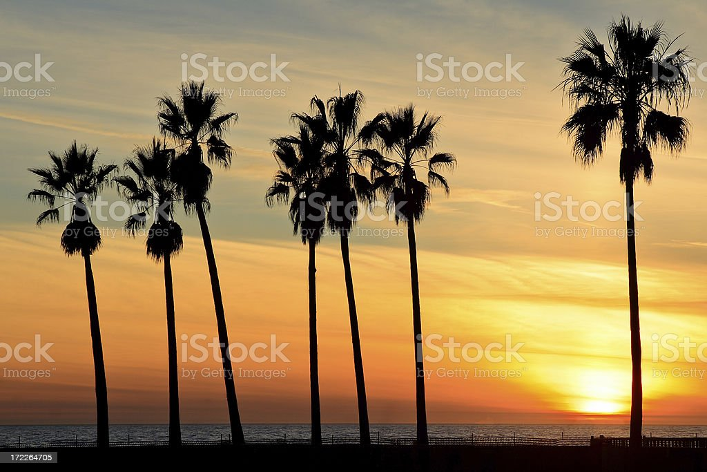 Venice Beach sunset Palm trees silhouetted at sunset (Venice, California). Beach Stock Photo
