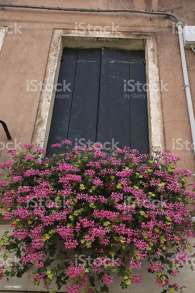 Venice: Flowers royalty-free stock photo