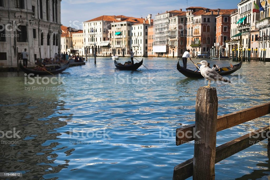 Venice: Grand Canal royalty-free stock photo