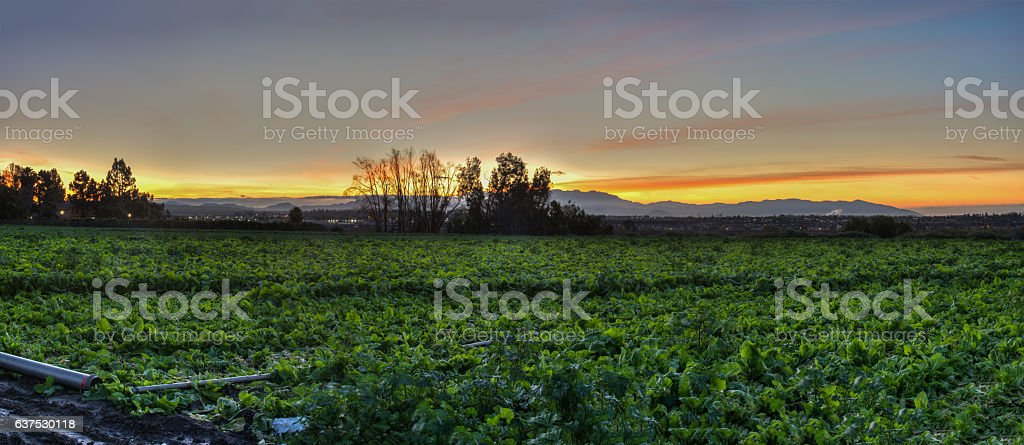 Ventura farmland at first light stock photo