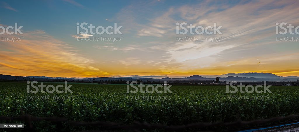 Ventura farmland under dawn light stock photo