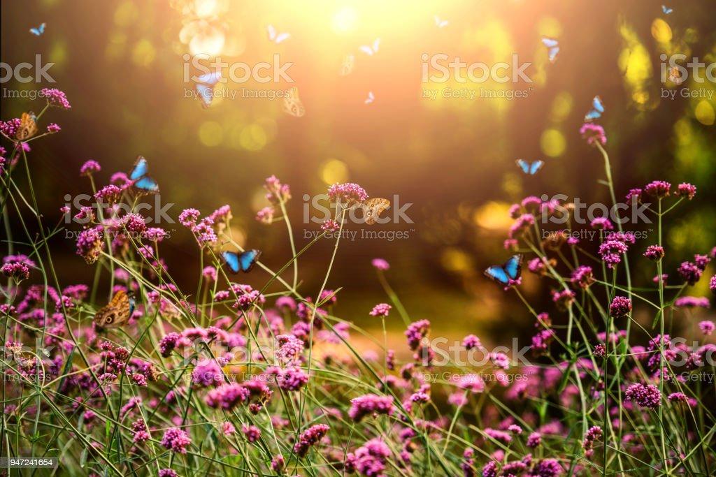 Verbena bonariensis and butterflies - foto stock