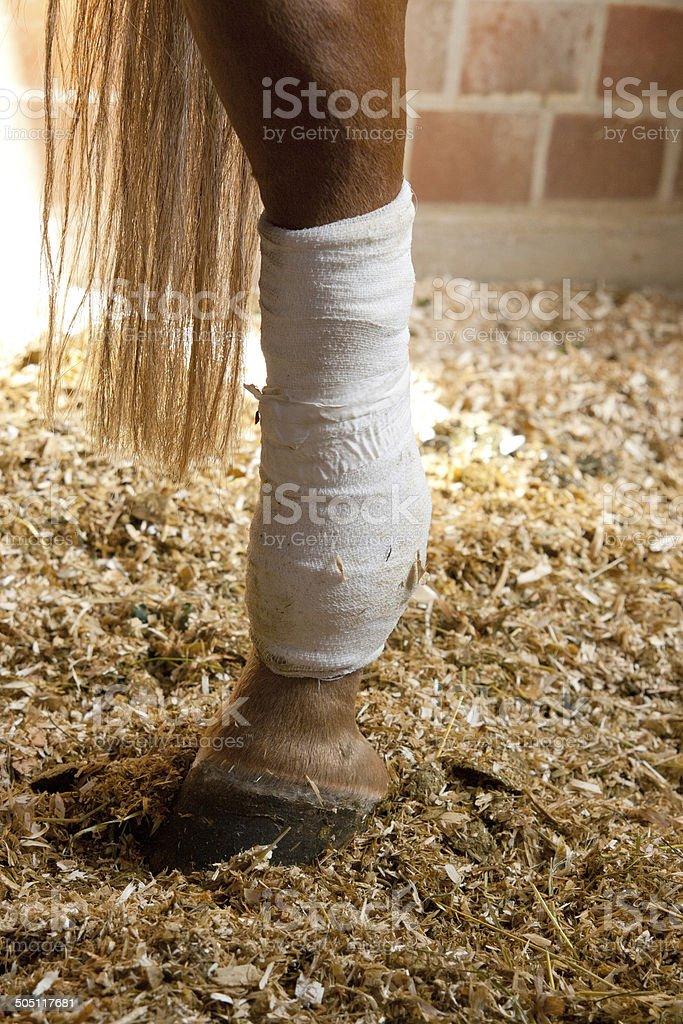Verbundenes Pferdebein – Foto