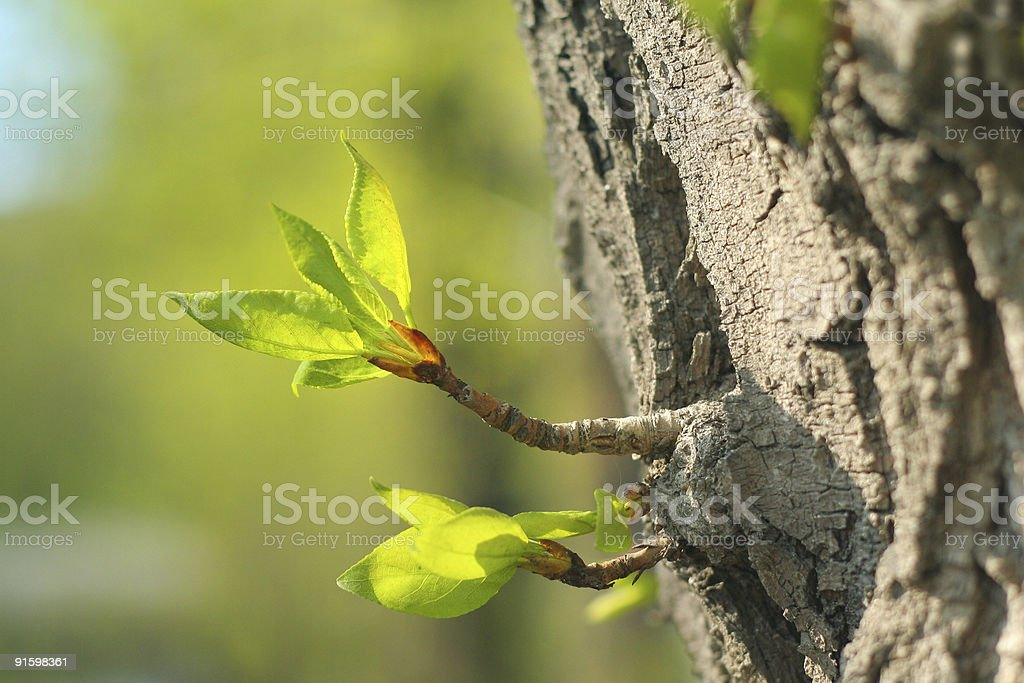 verdant sprout royalty-free stock photo