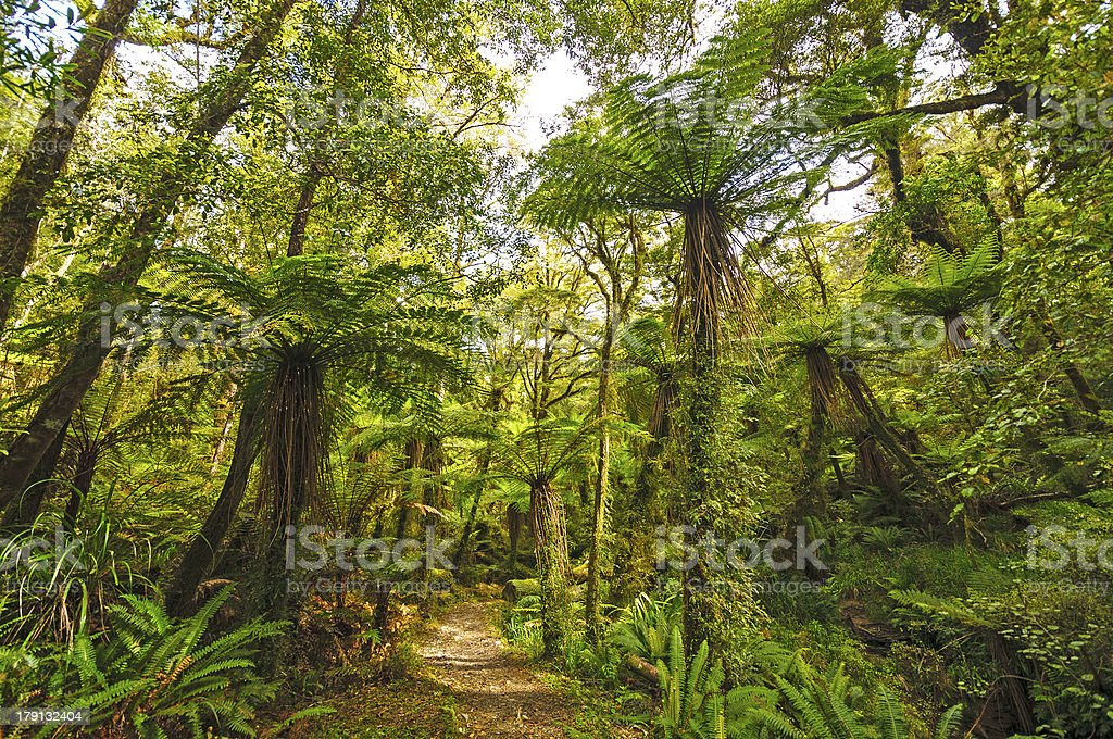 Verdant trail in a sub-tropical Forest stock photo