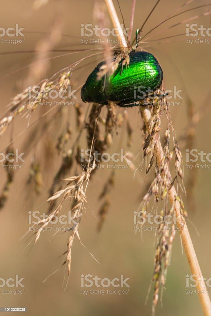 Speranza verde - foto de acervo