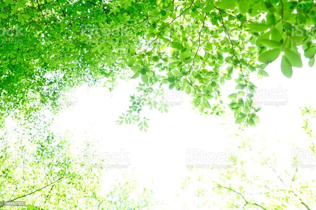 Verdure stock photo