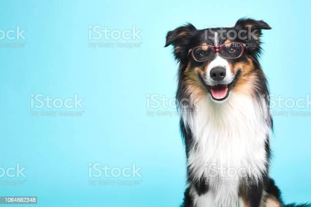 Verkleideter hund mit brille picture id1064662348?b=1&k=6&m=1064662348&s=612x612&h=8mlrtn6jovtok5rtva5souqcbugz2tof0xsgbinvlna=