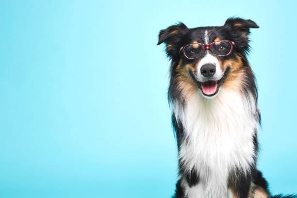 Verkleideter hund mit brille picture id1064662348?b=1&k=6&m=1064662348&s=612x612&w=0&h=jfrfjekbkropu5ggvkqahc0dd qnze06z8ykvzwbqii=