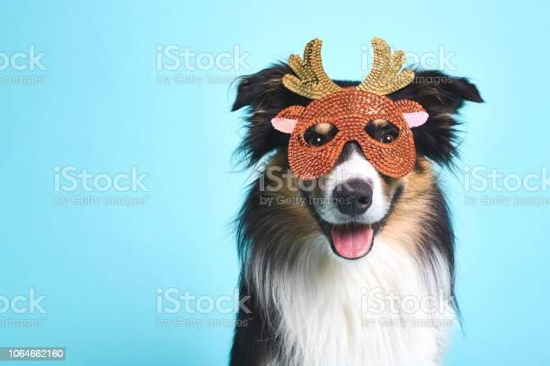 Verkleideter hund mit elchmaske picture id1064662160?b=1&k=6&m=1064662160&s=612x612&h=eg4qlw7qnzrxvwm  w 3dg8djny4ftr3t2tlgyhzca0=