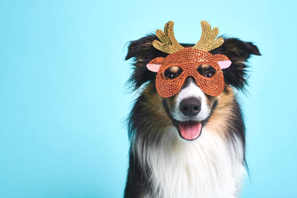 Verkleideter hund mit elchmaske picture id1064662160?b=1&k=6&m=1064662160&s=612x612&w=0&h=oqef ky3bltyvzk2ghcc2kwpjv fsqfio jw0l0cbse=