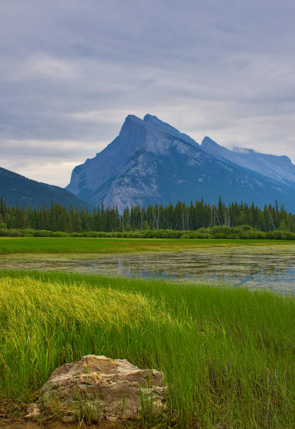 Vermilion Lakes Overlooking Mount Rundle. Rocky mountain canada ( Canadian Rockies ). Near the city of Calgary. Portrait, fine art. Banff National Park, Alberta, Canada: August 4, 2018 stock photo