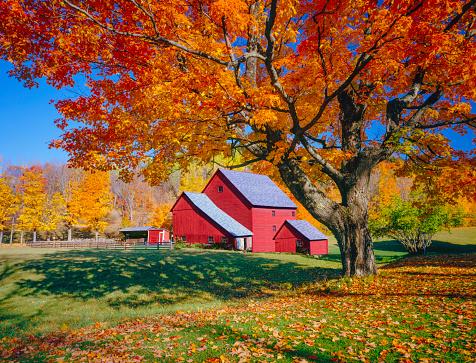 istock Vermont autumn with rustic barn 181149209