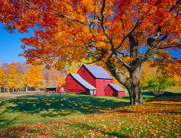 Vermont autumn with rustic barn stock photo